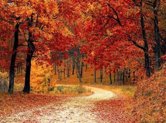Zadbaj o siebie na jesień